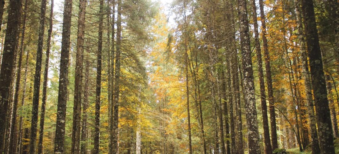 Explore Italy: Hiking in Asiago